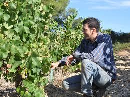 terroir du Languedoc Roussillon Picpoul de Pinet
