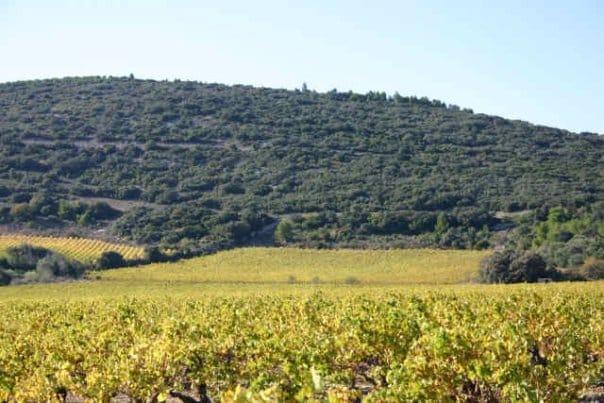 terroir du Languedoc Roussillon Frontignan