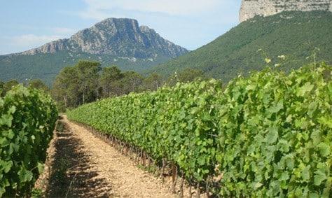 terroir du Languedoc Roussillon Pic Saint Loup
