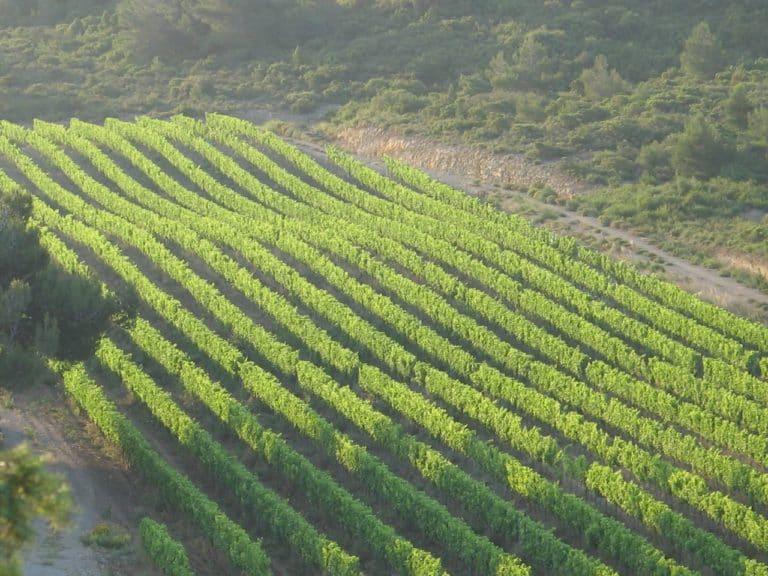 terroir du Languedoc Roussillon La Clape